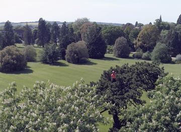 Image of Arborist working within tree